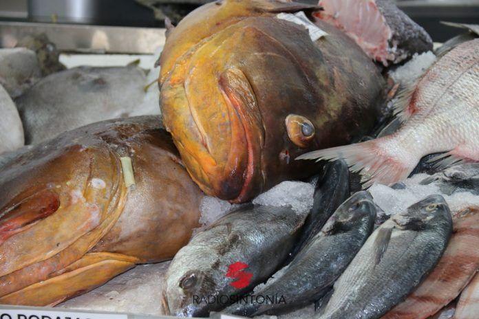 pescado pesca cofradías fuerteventura