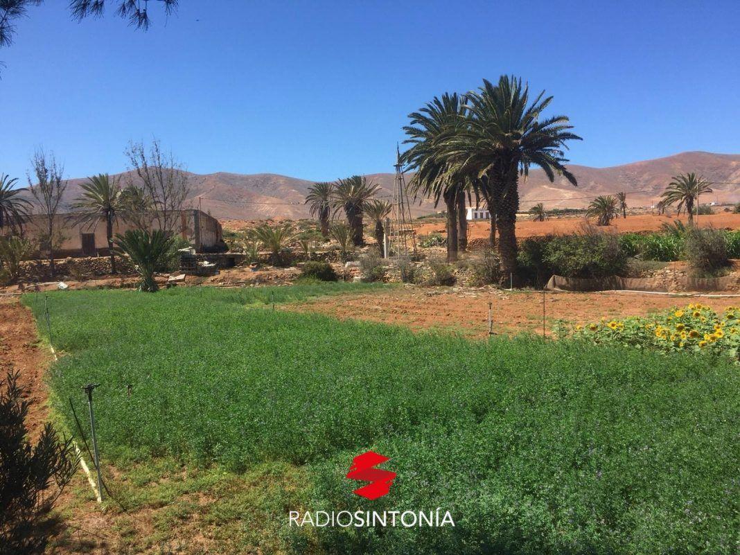 fuerteventura plan entorno Cultivos Fuerteventura. Agricultura. antigua turismo nacional