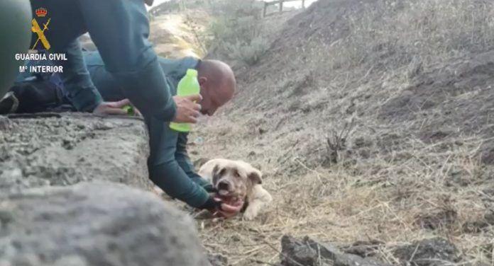 perros Virales Fuerteventura 2019