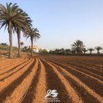 frutos fuerteventura patrimonio cultural Fuerteventura