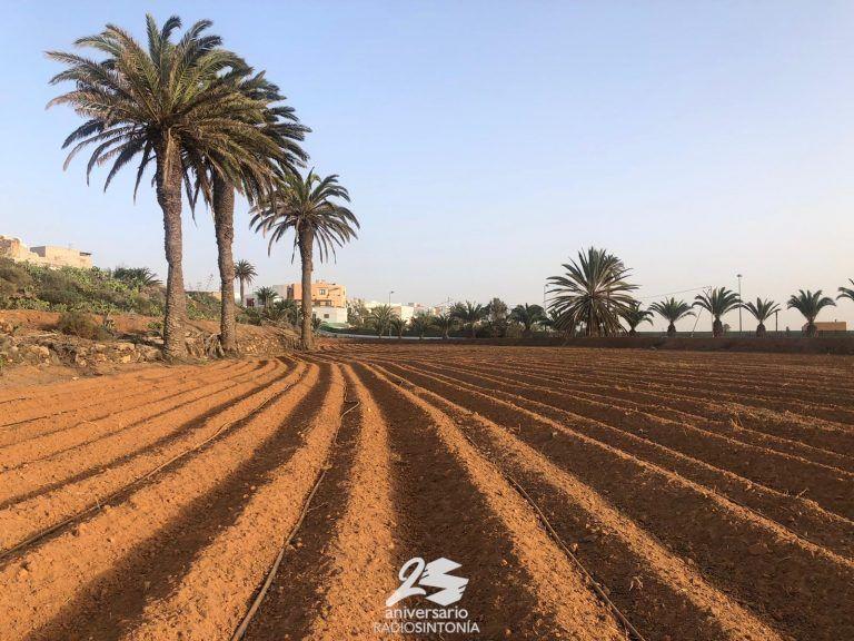 La Rosa de Fuerteventura – El proyecto que quiere traer a Fuerteventura frutos de hueso y pepitas – 19.02.21
