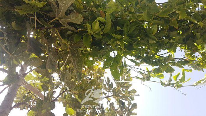 huerto planta plantas curso antigua árboles