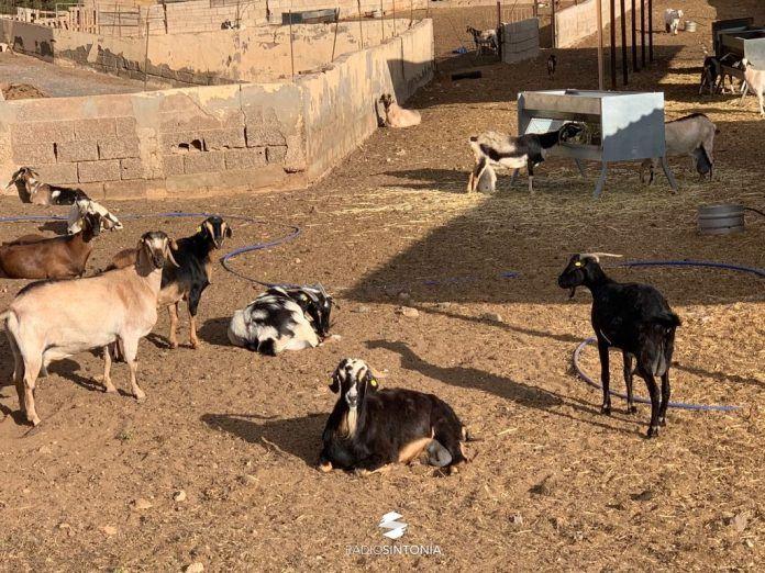 sector ayudas defensa sanitaria ganadero ganadería